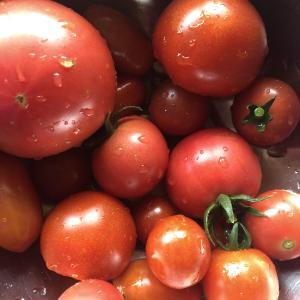 湯上りはトマトいっぱい