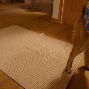 フードカーペット