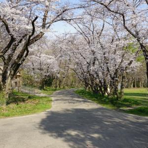 秋ヶ瀬公園へ