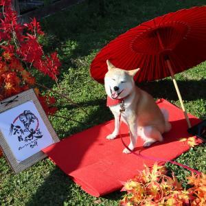 令和日本犬博2019 vol.01