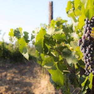 【簡単解決】モレ サン ドニのおすすめワイン7銘柄《ソムリエ解説》付きで深堀可能