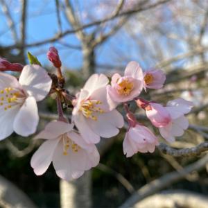 3学期終了〜春休み〜