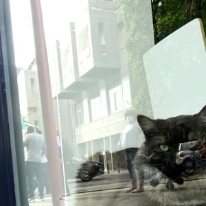 パリ郊外、7月の黒猫