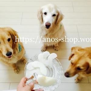 犬話:わんこ達は毎晩、手作りご飯を食べてます