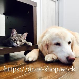 犬話:ゴールデンがリンパ腫になった時の治療・投薬・薬代などを固定ページで公開します