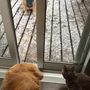 猫犬話:雪が降ると、犬は喜び庭駆け回り、猫はこたつで丸くなる。を検証