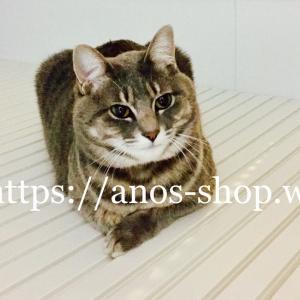 猫話:お風呂のゆぶねの蓋が大好きなにゃんこ