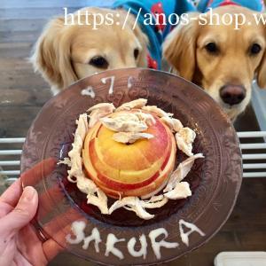 犬話:さくら、祝7歳*リンゴ&ササミの簡単ワンコのお誕生日ケーキの作り方