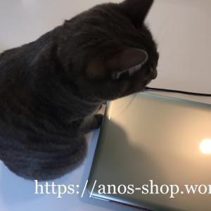 猫話:パソコンの熱源から暖をとるにゃんこ