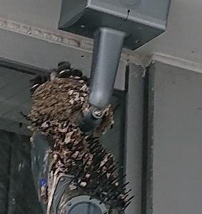 ツバメの巣 かわいい