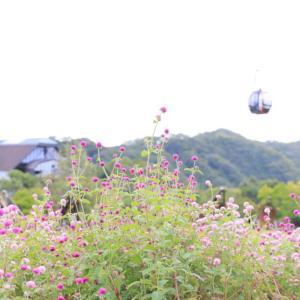 神戸布引ハーブ園を口コミ/お得に楽しむ方法やおすすめの撮影スポット【クーポン紹介】