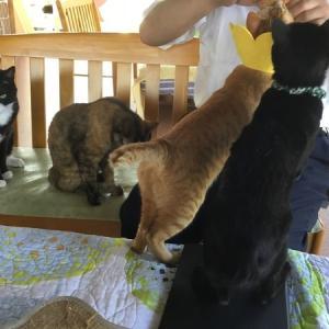 暇つぶし (保護猫カフェ)