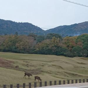 ■紅葉の奈良はバイクシェアで~興福寺・春日大社・東大寺~(奈良県奈良市)