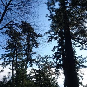 ■御油の松並木と赤坂宿(愛知県豊川市)