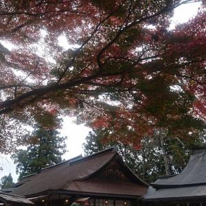 ■「近鉄全線3日間フリーきっぷ」で一人旅をしてくるよ(その7)紅葉の吉野へ電車旅『吉水神社』(奈良県吉野町)