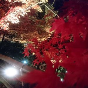 ■御土居(おどい)って何?北野天満宮ライトアップへ(京都府京都市)