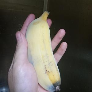 アイスクリームバナナの味はバナップル以上で美味すぎる。