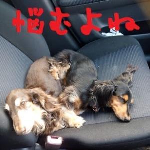 2020/01/17 Fri 晴 難解
