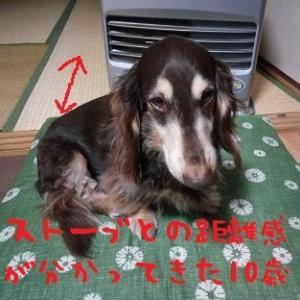 2020/01/22 Wed 曇のち雨 暖冬でも寒い