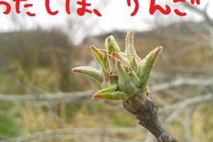 2020/04/05 Sun 晴 バス