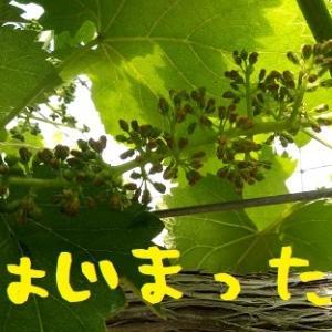 2020/05/25 Mon 晴のち曇 開花開始