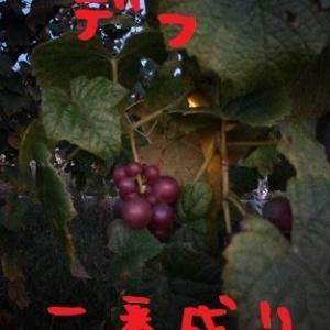 2020/10/19 Mon 晴 最近の