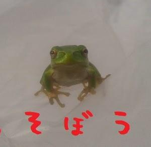 2020/10/21 Wed 晴 楽しき外作業
