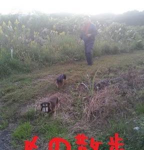 2020/10/23 Fri 雨のち晴 収穫終了