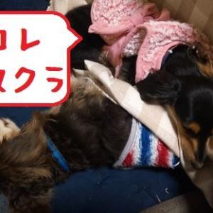 2020/11/20 Fri 雨のち晴 コタツの風景