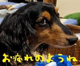2021/06/14 Mon 晴 粒間引カー養成アプリ