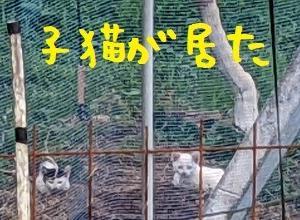 2021/06/26 Sat 曇 子猫発見