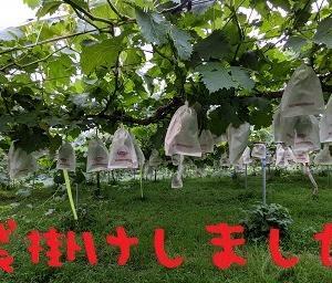 2021/07/02 Fri 曇のち晴 佳境
