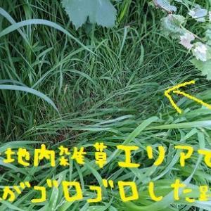 2021/07/08 Thu 曇ときどきスコール 嫌だけど獣害の季節