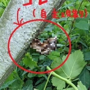 2021/07/24 Sat 晴 二年に一度は蜂トラブル