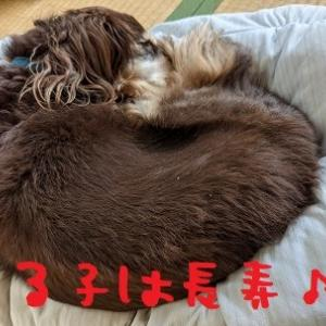 2021/07/25 Sun 晴 犬はシニア