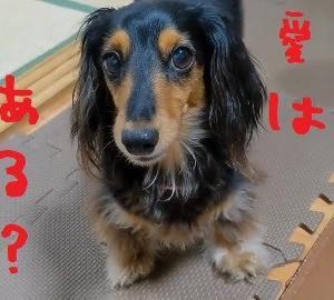 2021/07/26 Mon 晴 写真は愛