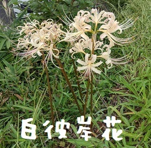 2021/09/24 Fri 晴 ビバ湯郷温泉