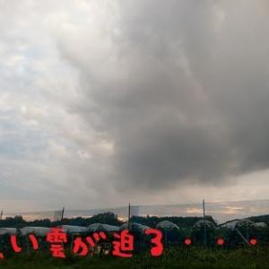 2019/08/23 Fri 曇ときどき雨 スコール被害