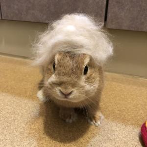ハロのヘアスタイル…プロトタイプたちです 意外と面白くならなかったのでまとめてご紹介です