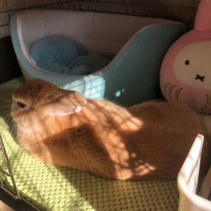 Bask in the sun. ひなたぼっこです。