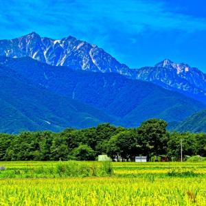 長寿県トップに輝く信州の健康食を見習おう!