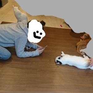 【保護猫カフェ】たまちゃんとのスペシャルな時間0306
