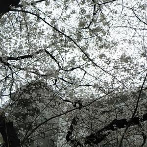 【日常】賑やかな3日間_0326