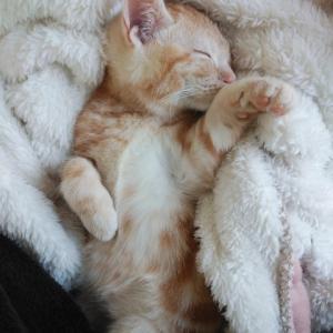 【猫日記】猫と生きるという選択