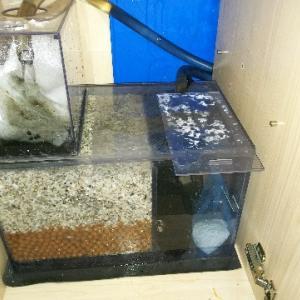 我が家の水槽スペック ~手間のかからない水槽を目指して~