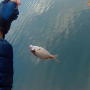 魚が釣れたら、ネコが食う。まったり佐世保市フカセ釣りの巻き