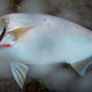 色々な釣り方で色々な魚を釣ってみよう【7種目釣行】