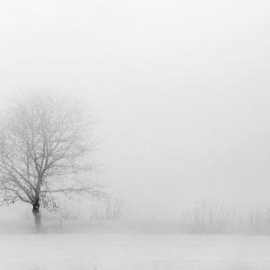 イヴに寄せて ねことトビと雪の日の記憶。