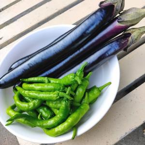 【食】ナスの効能とナス料理
