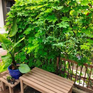 【季節の暮らし】庭の様子とコーヒー談義